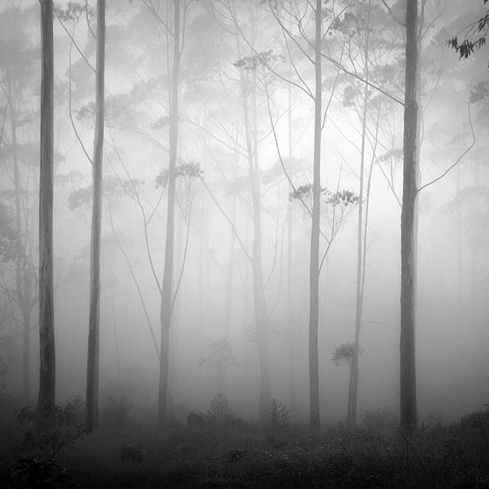 """""""Silence"""" Gambar, Hakcipta Terpelihara Hengki Koentjoro"""